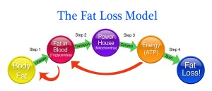 The Fat Loss Model